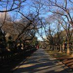 El Parque Ueno, un deleite visual