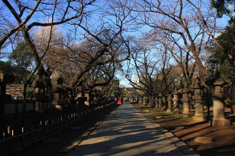 El Parque Ueno un deleite visual