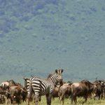 Parque Nacional Serengeti en Tanzania