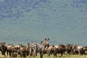 maravillas de tanzania